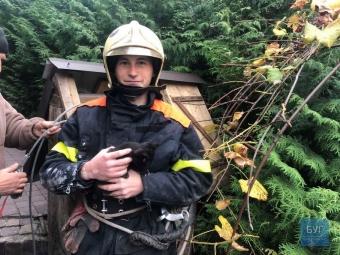 У Володимирі рятувальники з колодязя дістали кошеня