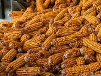 Володимир-Волинський суд оштрафував жінку за крадіжку кукурудзи