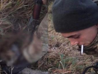 На Волині прикордонники познущалися з тварини