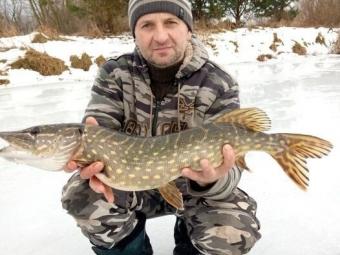 У Володимир-Волинському районі рибалка упіймав щуку-гіганта
