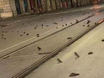 У Римі сотні птахів загинули через запуск новорічних феєрверків
