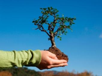 У Володимирі планують провести акцію з висадки дерев