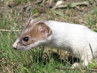 До Червоної книги додали 171 вид тварин