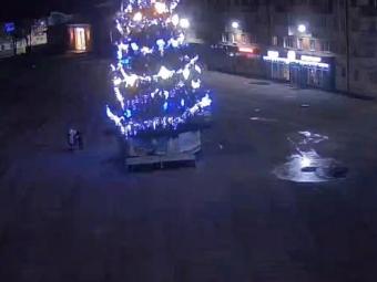 На «мауглі», який забрався на ялинку у Володимирі, поліція склала адмінпротокол