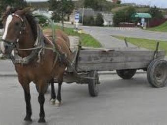 У волинянки з під носа вкрали коня і підводу