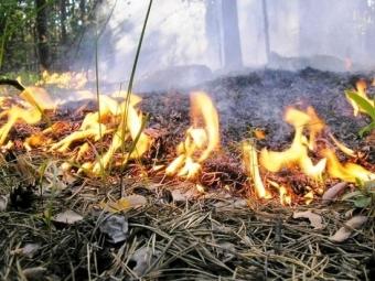 Через суд з чоловіка намагаються стягнути майже 90 тис. грн. штрафу за спалення лісу