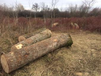 На Волині лісівники спіймали «чорних лісорубів» і перевіряють приватні пилорами