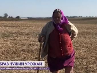 Земельний скандал у Володимир-Волинському районі: фермер змолотив 14 гектарів чужої сої і не визнає вини