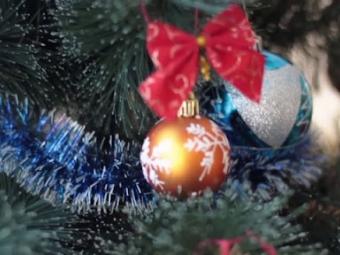 На новорічні свята у Володимирі знову стоятиме жива ялинка