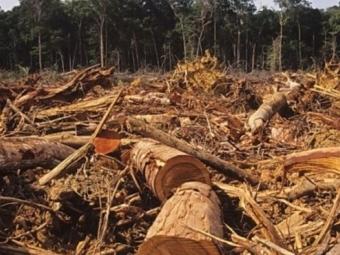 Екоінспекція нарахувала понад 152 мільйонів шкоди завданої довкіллю на Волині