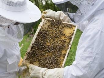 Пасічники Володимир-Волинської громади мають можливість отримати дотацію за наявні бджолосім'ї