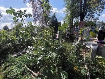 На Ладомирському кладовищі у Володимирі впало старе дерево