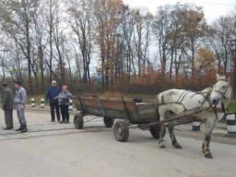 Під Ковелем визволили з пастки коня, що застряг між коліями