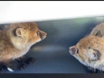 Волинські зоозахисники затримали браконьєра