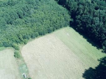 У Володимир-Волинському лісгоспі створили кормові поля