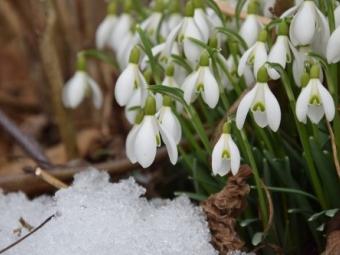 Україну чекає аномальна весна