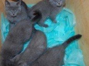 Українець хотів незаконно вивезти у Польщу кошенят