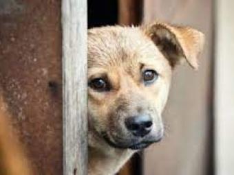 У Володимирі судили чоловіка за вбивство собаки на очах у дітей