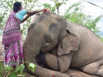 В Індії блискавка вбила 18 слонів