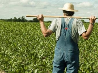Фермери зможуть отримати кредити під держгарантії на купівлю землі