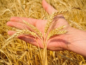 Україна експортувала понад 29 мільйонів тонн зернових