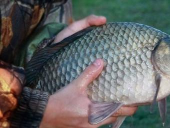 У Хорові впіймали рибного браконьєра