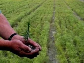 В Іваничах члени земельної комісії не хочуть виділяти землю лісовому господарству
