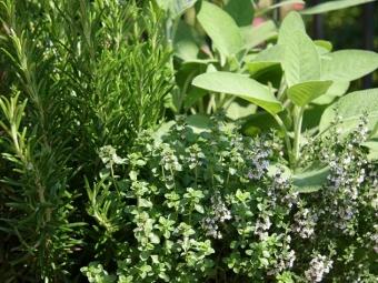 Збираємо «гербарій» для кухні